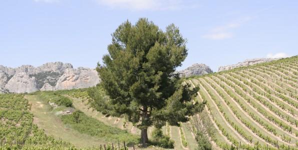 Les paysages forts sont souvent à l'origine de nombreuses appellations de qualité !