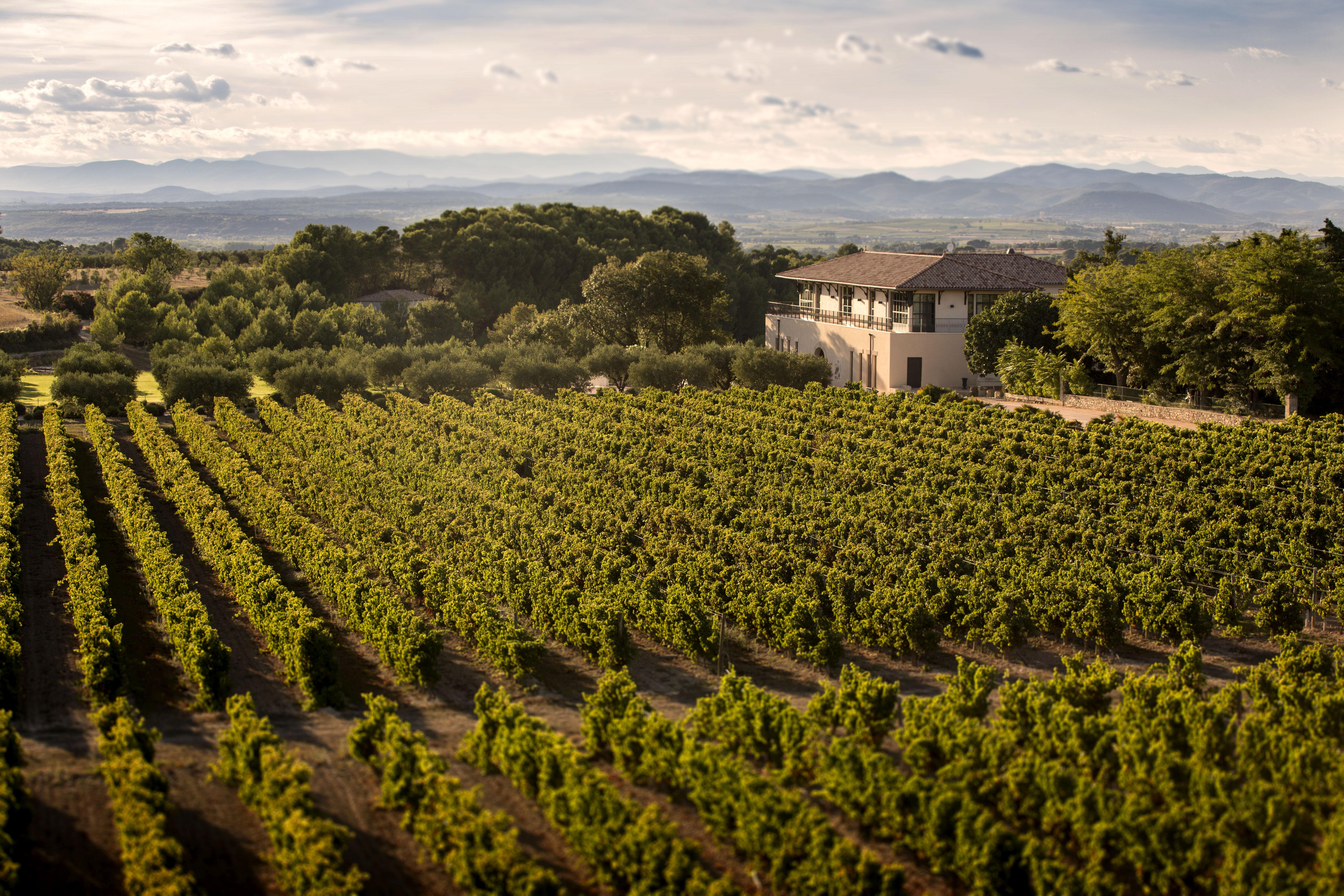 Château Paul Mas près de Pézenas offre des prestations de services touristiques intégrées -