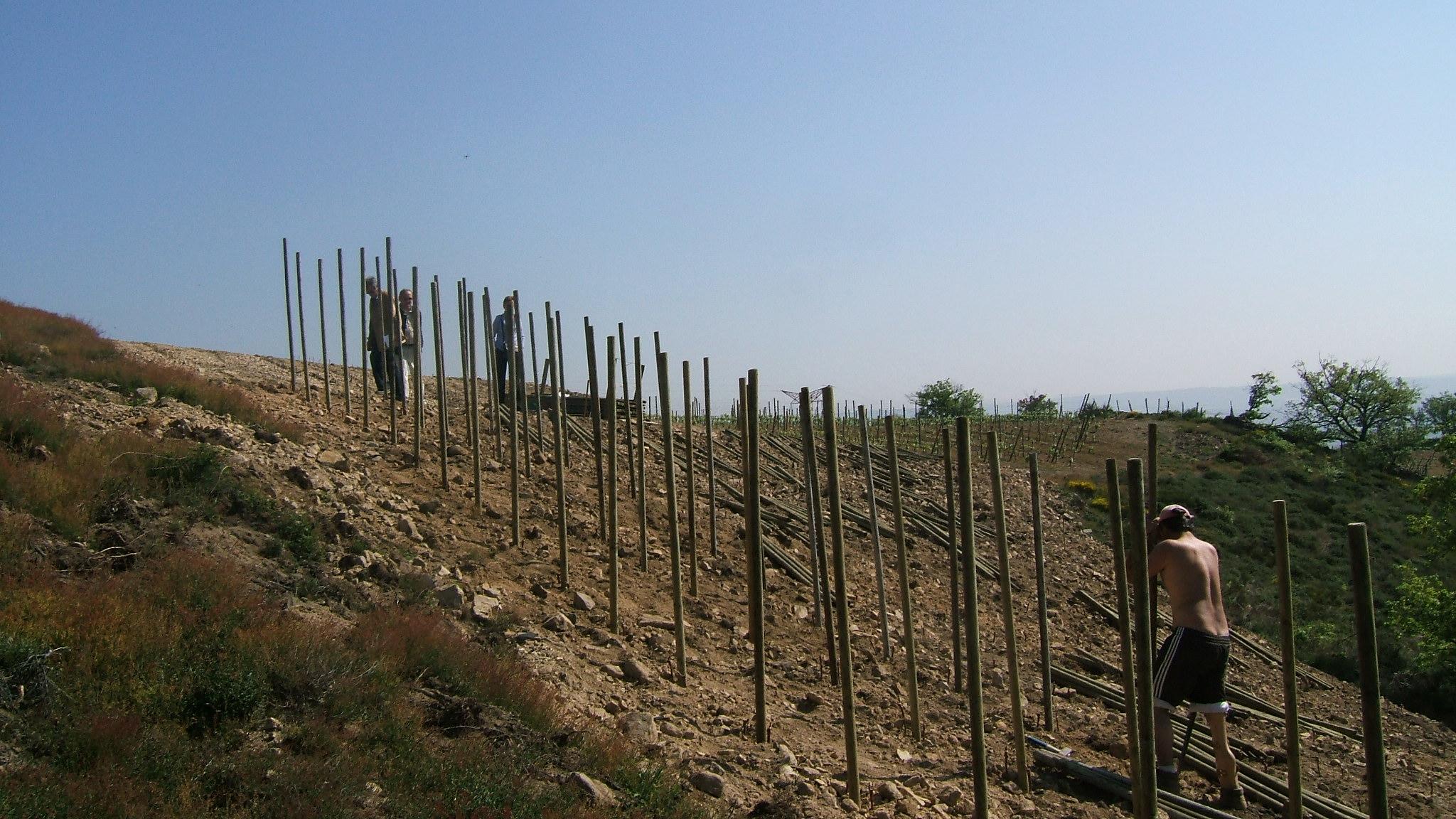 Installation d'un plantier dans le terroir de Côte Rôtie