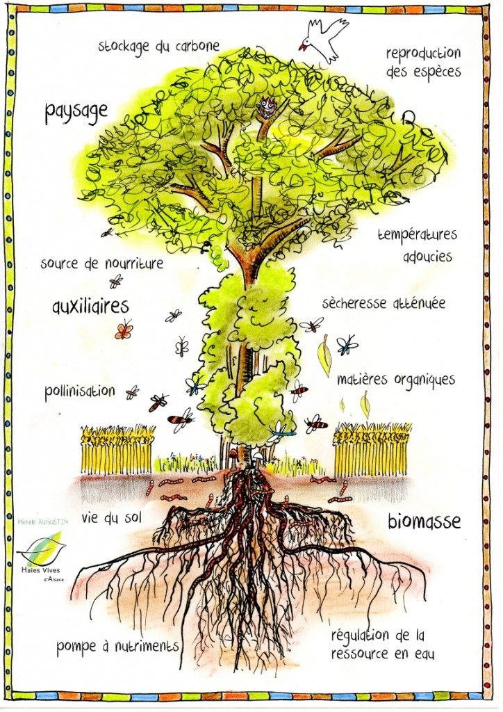 arbre-et-cadre-site-medium-signé-724x1024