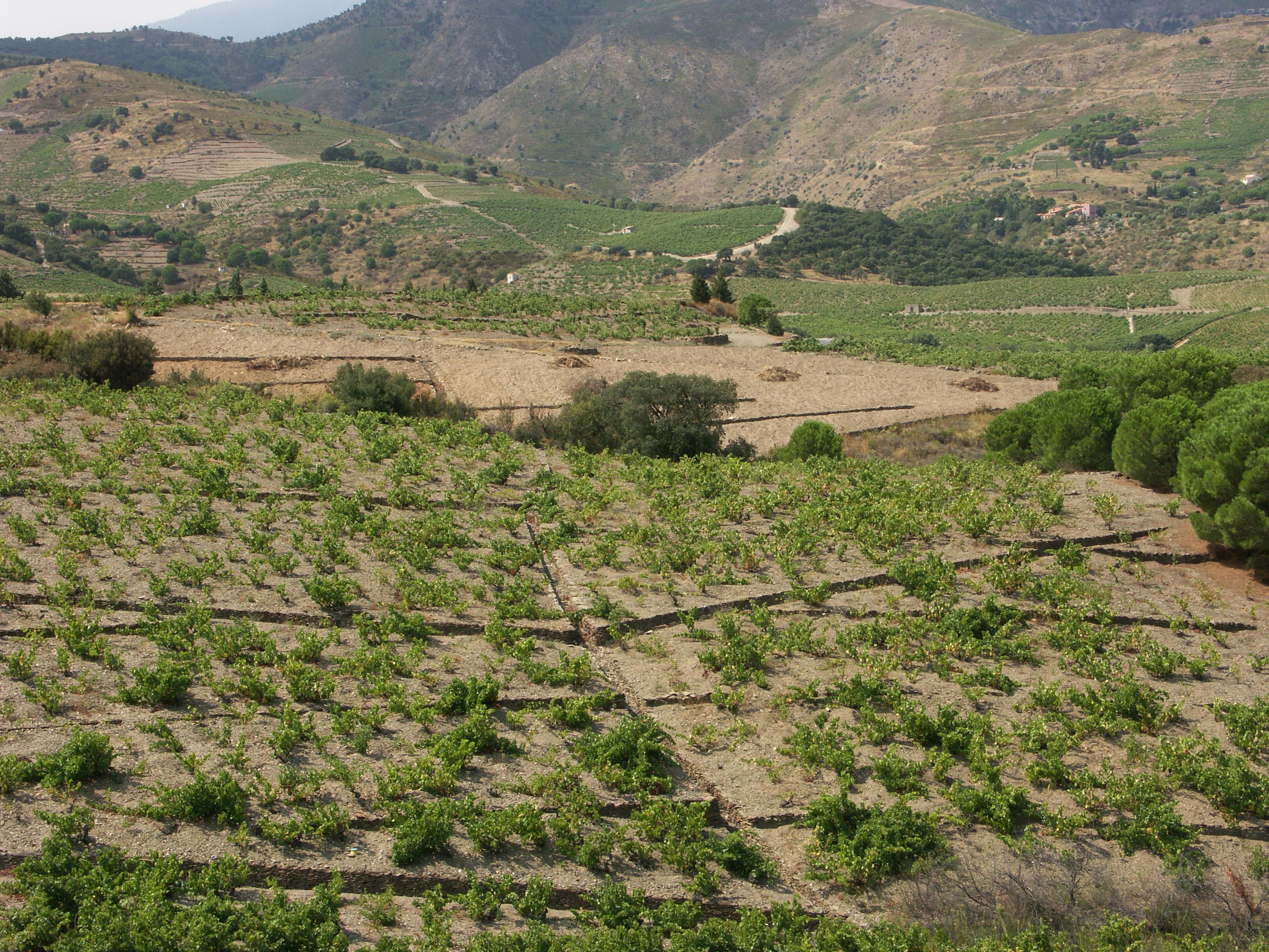 Peu de Gall : Pied de Coq : système de drainage pour éviter l'érosion des pluies violentes